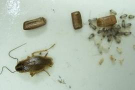 蟑螂屋与杀蟑胶饵哪个好用?
