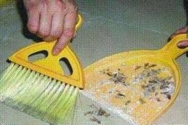 家庭除蟑螂最有效的方法