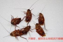 家里蟑螂灭不完怎么办