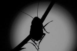 一招消灭大小蟑螂,再也不用忍受蟑螂的烦恼