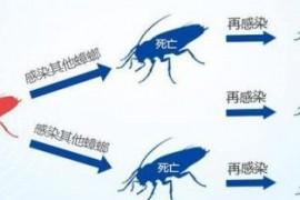 家庭杀灭蟑螂的几种方法