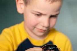 家里打扫得干净为什么还会有蟑螂
