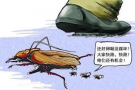 蟑螂为什么不能用脚踩只能用火烧