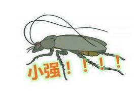 冬天零度有没有蟑螂