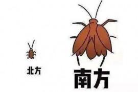 为什么有很大只蟑螂看不到小蟑螂