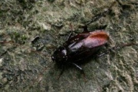 冬天室外有蟑螂吗