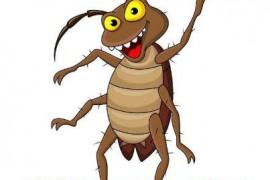 蟑螂冬天会出来活动吗