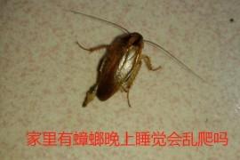 我很爱干净为什么床上还老有蟑螂