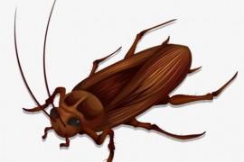 为什么一到晚上就有很多蟑螂出来