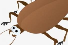 冬天蟑螂为什么不见了