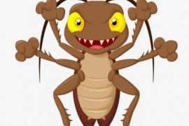 为什么卧室没有吃的东西有蟑螂