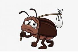 蟑螂冬天还在么