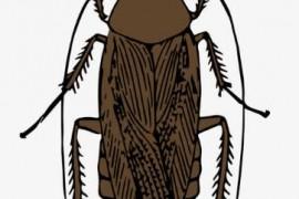 打死的蟑螂为什么一夜就分解了