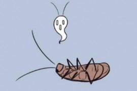 忽然厨房有好多蟑螂怎么办