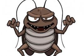 蟑螂在冬天是不是不出来