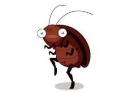在枕头里突然发现一只蟑螂怎么办