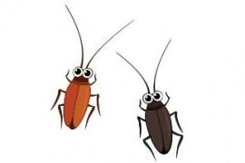 蟑螂如何去除干净