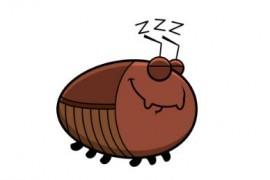 蟑螂在冬天室外会冻死吗
