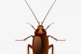 粉末型蟑螂药怎么使用最佳