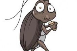 灭蟑螂药哪种效果好