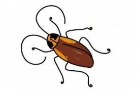 蟑螂是怎么进入家里的十五层