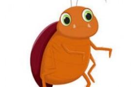 蟑螂为什么不能用脚踩怎么办