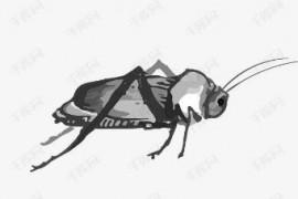 蟑螂是如何爬进行李箱的