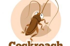 宿舍进了一只蟑螂怎么办