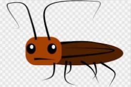 死蟑螂为什么肚子是扁的只剩壳了