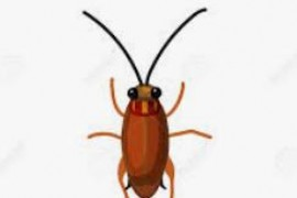 冬天蟑螂为什么不活跃