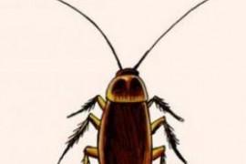 冬天蟑螂还会出没吗