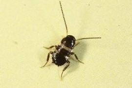 新房子有小蟑螂怎么办