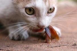有什么适合家养的蟑螂天敌