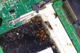 为什么苹果电脑散热器有蟑螂