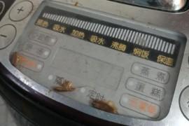 为什么有两只蟑螂爬到电饭锅里面