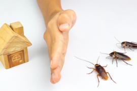 蟑螂药这么厉害为什么还是有蟑螂