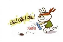 家里有蟑螂用什么办法消灭最快