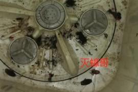 洗衣机驱蟑螂最有效的方法