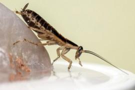 客厅突然发现一只蟑螂是什么原因