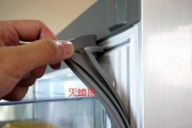 冰箱的封条里为什么会有小的蟑螂